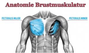 Anatomie-und-Funktion-der-Brust-300x180